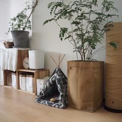加湿器 ハイブリッド式 アロマ タワー型 ハイブリッド式 木目 加湿機 2.6L おしゃれ d-design SHKD3521 ナチュラルウッド ダークウッド アウトレット品 | ドウシシャ(加湿器)を使ったクチコミ「わんこグッズが増加中…(ノ∀\*)  乾…」