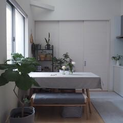 花器/雑貨/インテリア/家具/住まい/雑貨だいすき お花と暮らしはじめて 1番増えたのが花器…(1枚目)