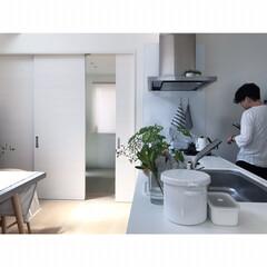 植物と暮らす/キッチン/キッチン雑貨/住まい 白×green×グレー 色味を抑えてスッ…