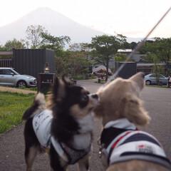 犬と泊まれる宿/グランピング/春のフォト投稿キャンペーン/わんこ同好会/おでかけ/旅行/... わんちゃんと泊まれるグランピング。 富士…