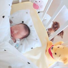 ミニチュアダックス/初孫誕生/赤ちゃん/BABYフォト/LIMIAペット同好会/わんこ同好会 今日〜無事に退院しましたよーーーーッ❣ …