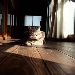 冬/猫 やっぱり猫は縁側が似合うね。