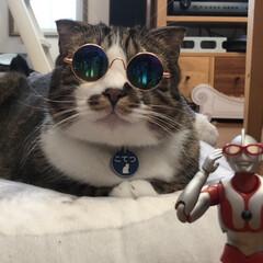 ウルトラマン/フィギュア/ミニチュア/2018/フォロー大歓迎/ペット/... ウルちゃんにぴったりなメガネがありました。