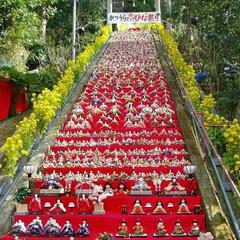 勝浦/遠見岬神社/お出かけ/ひな祭り/フォロー大歓迎/ピンク 以前に行った時の写真ですが 勝浦ビッグひ…
