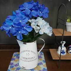青🎵/紫陽花/ダイソー/雑貨/暮らし/節約/... 家の庭の紫陽花は淡い色なので 大好きな青…