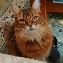 ビビアン/猫好き/にゃんこ同好会/フォロー大歓迎 ヒーターの前にいたビビアン 私がソファー…