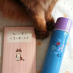 バースデーカード/studioCLIP/可愛い水筒/プレゼント/雑貨/今日は世界猫の日 ゆうべ 友達が誕生日プレゼント持ってきて…