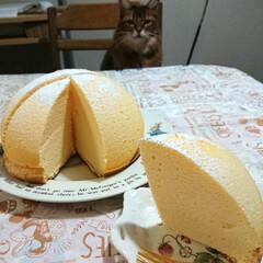 プリン/チーズケーキ/おやつ/コッコきみまろ/シマダエッグ/卵 ちょっと遠くの魚屋さんに行く途中 いつも…