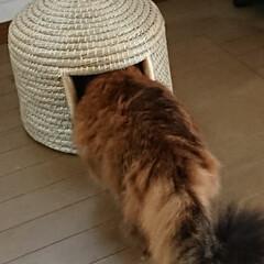 猫ちぐら/カインズホーム/マリリン/ビビアン/猫 カインズで猫ちぐらが安かったので買ってみ…