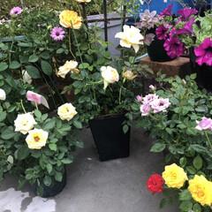 ガーデニング/小さな庭 私の小さな庭です🤗