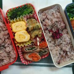 小松菜/肉巻き/卵焼き/雑穀米/わたしのごはん/おうちごはんクラブ/... 今日のお弁当😊 *肉巻き …シソと、にん…