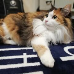 おはよう/フォロー大歓迎/ペット/ペット仲間募集/猫/にゃんこ同好会 おはようにゃ🐱💕 やっぱり右手が出てる😸✨