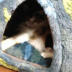 ニット帽/粘土人形/三毛猫/猫/ハンドメイド/フォロー大歓迎 おはようにゃ😸 今日も、すでに寝てるにゃ…