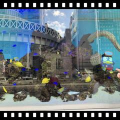 風景 ☆熱帯魚の水槽の中で「うつぼ」 見つけた…(1枚目)