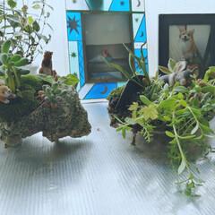 観葉植物のある暮らし キッチンの観葉植物💙中身を食べ終えた貝殻…