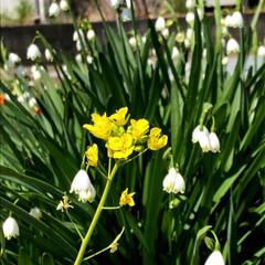 決意/花/季節/桜/春/ウォーキング/... 春ですね〜🌸 私の大好きな季節です。 気…(3枚目)