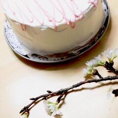シフォンケーキ/桜の紅茶/桜/バレンタインケーキ/ハンドメイド/スイーツ/... 桜の紅茶でシフォンケーキを焼いてみました…
