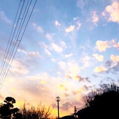 花/夕焼け/春/散歩/風景/小さい春 本日、夕方の散歩。  春を感じました〜🤗…