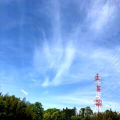 花/ウォーキング/ヘビ/風景/おでかけワンショット 今朝、ウォーキング中に遭遇🐍 あまり下を…(2枚目)