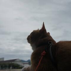 ねこ/ねこのきもち/散歩/フォロー大歓迎/にゃんこ同好会 雨ばかりで憂うつだにゃ~😿 今日は楽しく…(1枚目)