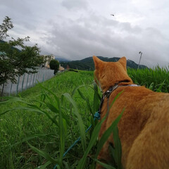 フォロー大歓迎/にゃんこ同好会/ねこのきもち/ねこ/曇り空/雨/... 今日も雨が降ったり止んだり😿🐾☔(1枚目)