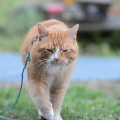 フォロー大歓迎/にゃんこ同好会/猫との暮らし/ねこのきもち/ねこにすと/雨/... 散歩行こうとしたら雨が降ってきたニャー😿…
