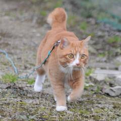 フォロー大歓迎/にゃんこ同好会/猫との暮らし/ねこのきもち/雨/散歩/... 雨が降ってきたニャー! 😿走って帰るニャ…
