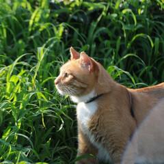 フォロー大歓迎/にゃんこ同好会/ねこのきもち/ねこ/晴れ/梅雨/... このところの雨で草が大分伸びてきたニャー…