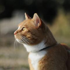フォロー大歓迎/にゃんこ同好会/猫との暮らし/ねこにすと/ねこのきもち/散歩/... 春が近づいているのかニャー😸🌱