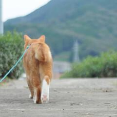 ねこのきもち/散歩/おでかけ/フォロー大歓迎 早く散歩に行こうニャー😻😻😻(6枚目)