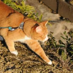 フォロー大歓迎/にゃんこ同好会/猫との暮らし/ねこのきもち/散歩/おでかけ 日向ぼっこは暖かくて気持ちいいニャー😻😻😻(5枚目)
