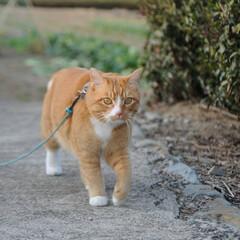 フォロー大歓迎/にゃんこ同好会/ねこのきもち/ねこ/散歩/猫の日 今日は猫の日なのかにゃ🐱 ポカポカ陽気で…(9枚目)