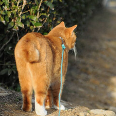 フォロー大歓迎/にゃんこ同好会/猫との暮らし/ねこのきもち/散歩 朝から雨降ってたけど止んでよかったニャー…(7枚目)