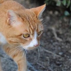 フォロー大歓迎/にゃんこ同好会/ねこのきもち/ねこ/散歩/猫の日 今日は猫の日なのかにゃ🐱 ポカポカ陽気で…(10枚目)