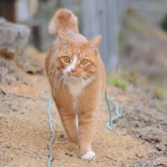 フォロー大歓迎/にゃんこ同好会/散歩/猫との暮らし/ねこのきもち/おでかけ 日が落ちて冷えてきたニャー🙀 お日様が恋…(9枚目)