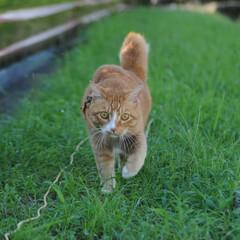晴れ/散歩/猫のいる暮らし/ねこのきもち/フォロー大歓迎 散歩日和⤴️⤴️⤴️😸🐾🐾🐾🐦➿➿🐦(1枚目)