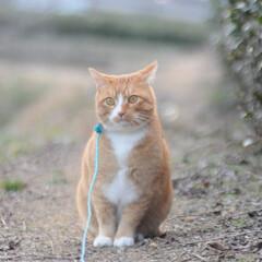 フォロー大歓迎/にゃんこ同好会/猫との暮らし/ねこのきもち/ポカポカ/散歩 今日はポカポカ陽気で散歩もウキウキだニャ…(6枚目)