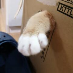 フォロー大歓迎/にゃんこ同好会/ねこのきもち/ねこ/散歩/猫 箱からにゃんこの手生えた🐾😸🐾⁉️ 今日…(1枚目)