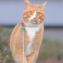 ねこのきもち/猫のいる暮らし/にゃんこ同好会/散歩/おでかけ/フォロー大歓迎 😸今日は体が軽いニャー🐾🐾🐾😻 スリスリ…(2枚目)