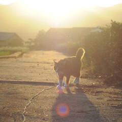 にゃんこ同好会/ねこのきもち/散歩/夕焼け/おでかけ/フォロー大歓迎 夕焼けがキレイだニャー😻 ‼️知らないお…(2枚目)