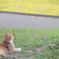 にゃんこ/ネコ/ねこのきもち/散歩/おでかけ/フォロー大歓迎/... 風が冷たくなってきて気持ち良いニャー😸