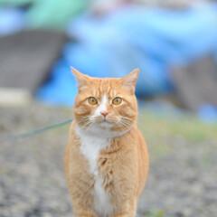 フォロー大歓迎/にゃんこ同好会/猫との暮らし/ねこのきもち/ねこにすと/雨/... 散歩行こうとしたら雨が降ってきたニャー😿…(2枚目)