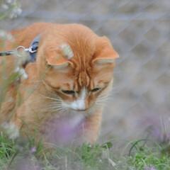 フォロー大歓迎/にゃんこ同好会/猫との暮らし/ねこのきもち/散歩/曇り空 また曇り空になっちゃったニャー😿 でも散…(6枚目)