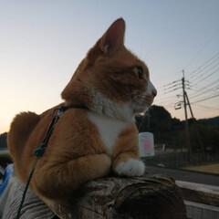 フォロー大歓迎/にゃんこ同好会/ねこのきもち/ねこ/秋/散歩/... いい天気だニャー😻⤴️⤴️ (2枚目)
