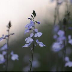 トラ/さんぽ/茶トラ/ねこのきもち/春のフォト投稿キャンペーン/フォロー大歓迎/... 春を感じるニャー🌱😸🌱(6枚目)