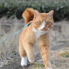 にゃんこ同好会/猫のいる暮らし/ねこのきもち/晴れ/散歩/おでかけ/... わーい😸日が射してきたニャー😸🌤️ 明日…