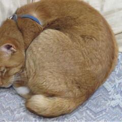 ねこ/トラ/寝る子/写真/ねこのきもち/フォロー大歓迎/... 遊びすぎて疲れたニャー😽😪😽(2枚目)