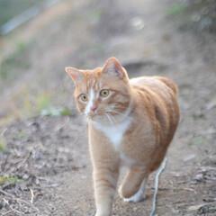 フォロー大歓迎/にゃんこ同好会/猫との暮らし/ねこのきもち/ポカポカ/散歩 今日はポカポカ陽気で散歩もウキウキだニャ…(7枚目)