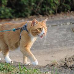 写真/フォロー大歓迎/にゃんこ同好会/ねこのきもち/ねこ/散歩/... 今日は今年一番の暑い日だったニャー😽💦💦…(2枚目)
