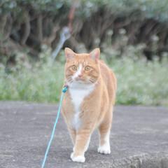にゃんこ同好会/ねこのきもち/猫のいる暮らし/曇り/散歩/おでかけ/... 空は曇っているニャー🙀 早く晴れにならな…(5枚目)